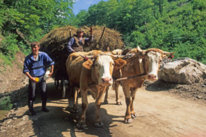 Traditional agriculture in Romania