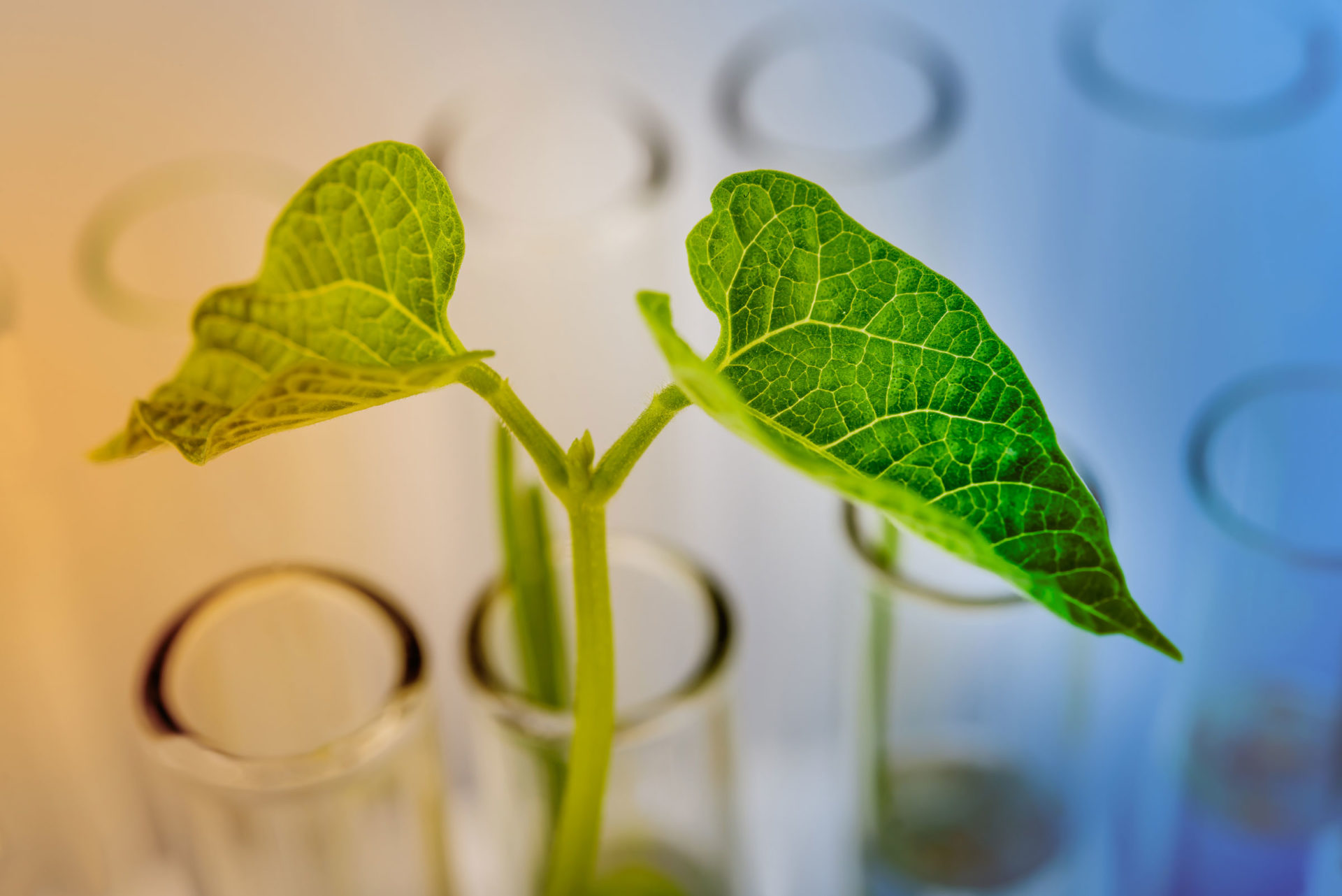 Knowledge drives the biobased chemical industry in the North