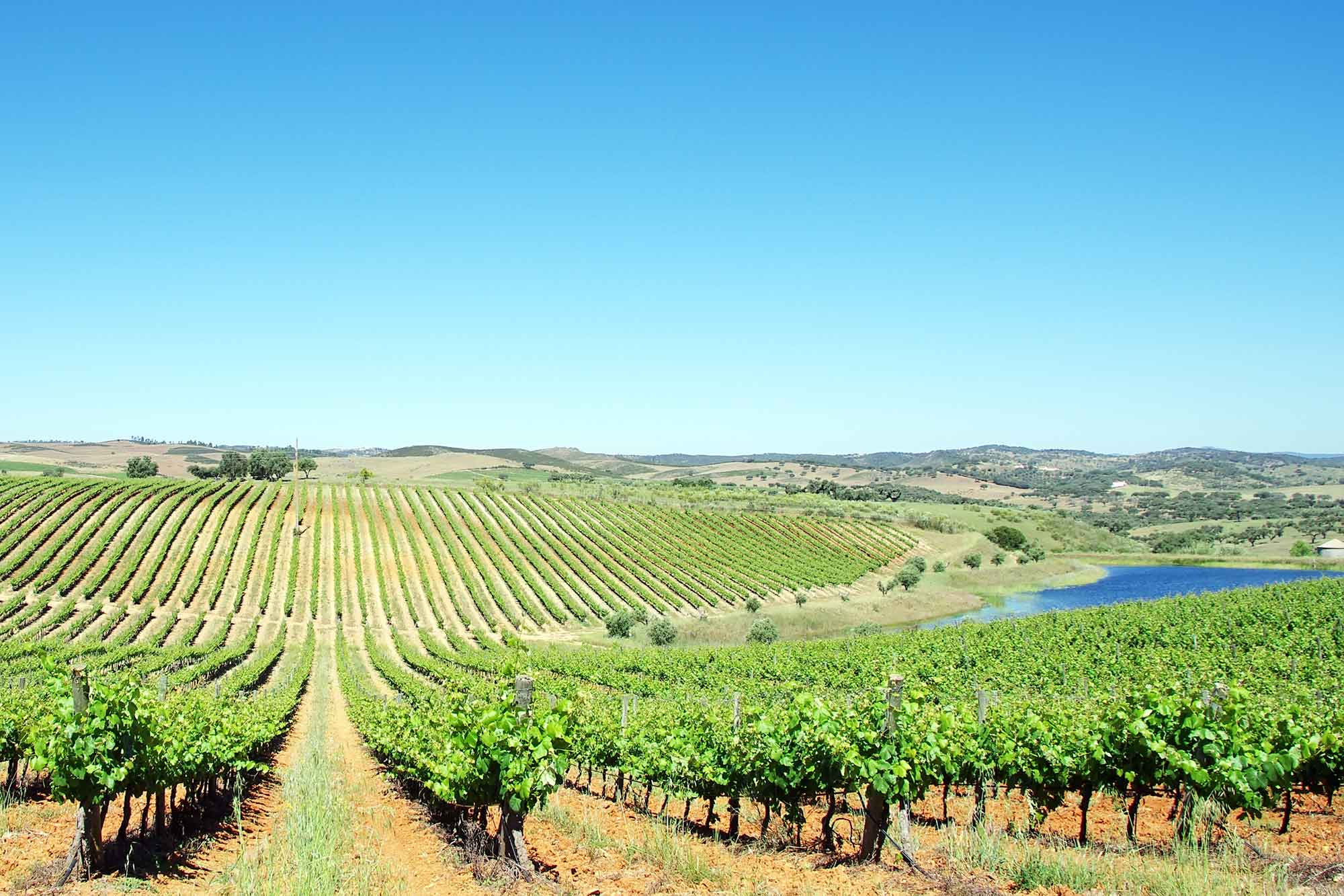 Portugal potential champion of the European bioeconomy 2
