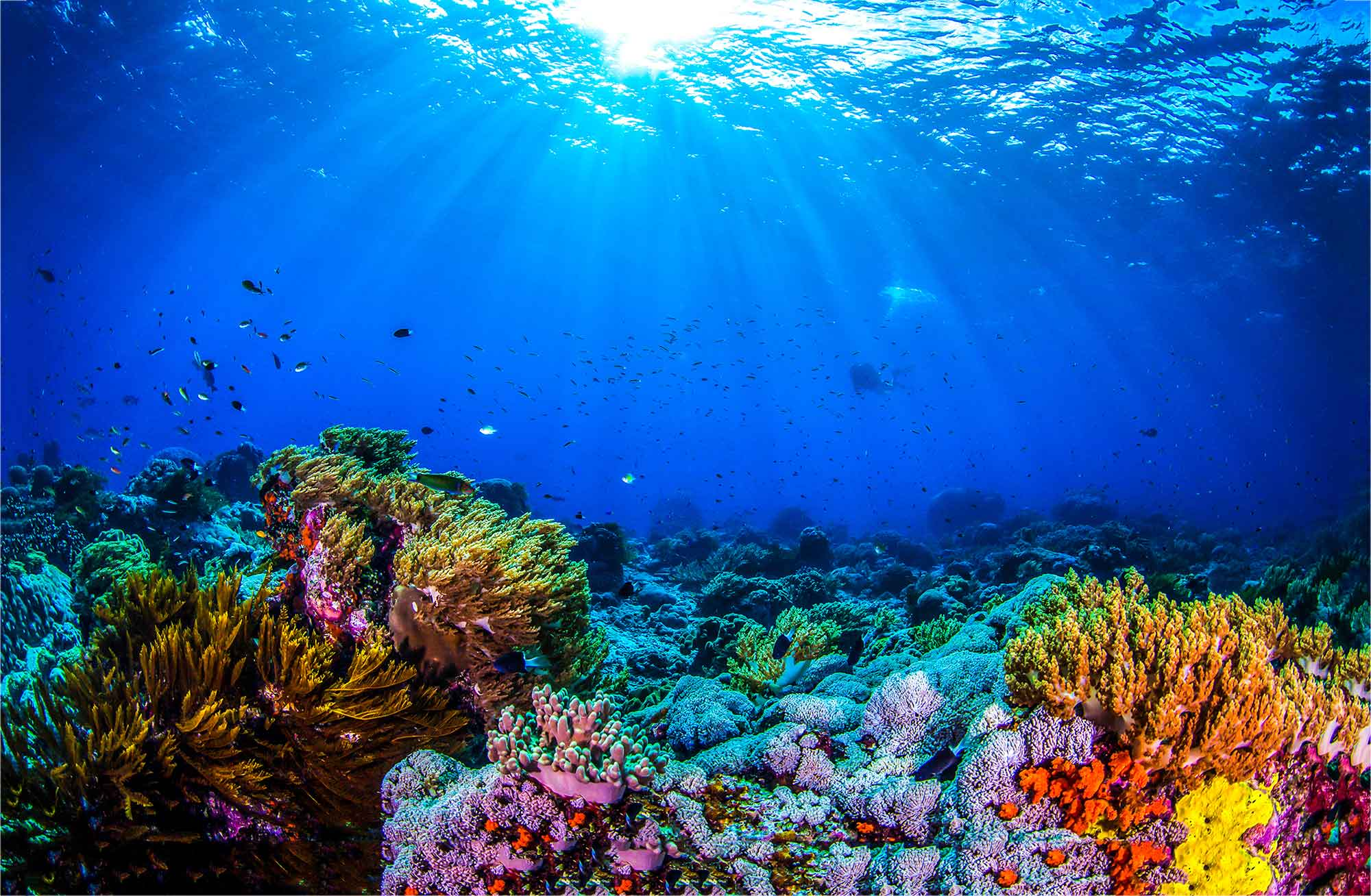 Diversity of species under water